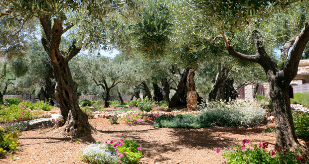 Photo of What Gethsemane teaches us about suffering